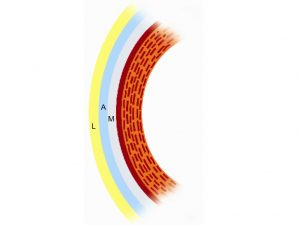 Representación de las tres capas lagrimales: M, mucosa; A, acuosa; L, lípida Rojo: córnea